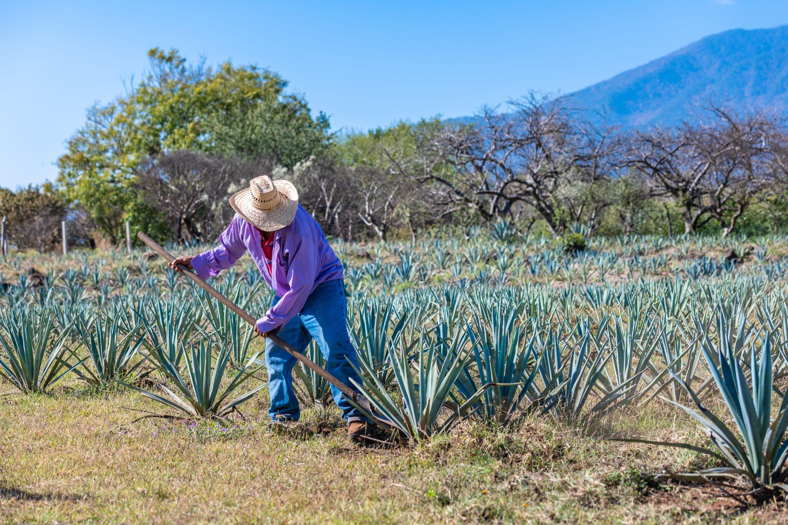 En qué consiste el famoso tequila tour jalisco