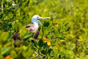 Tour aves Isla Contoy