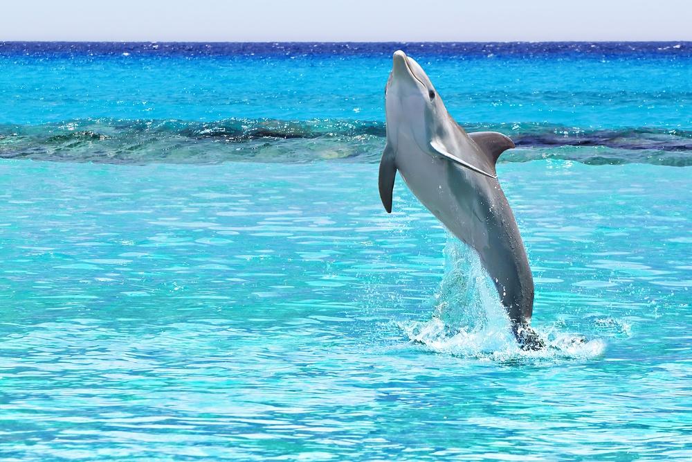 Delfín en Cancún, Playa Delfines