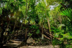 Selva Cenote Dos Ojos