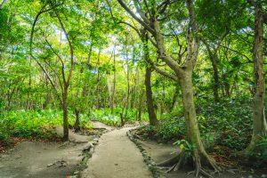 Selva de San Miguelito cercana al Museo Maya en Cancún