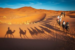 Tour en camello Los Cabos