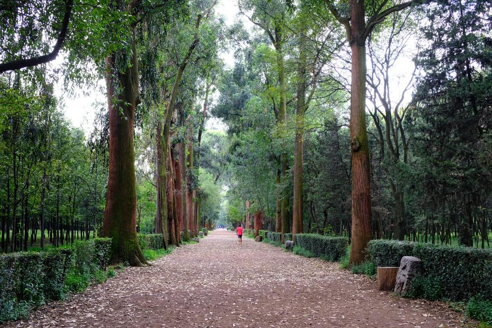 Jardín en Coyoacán, México