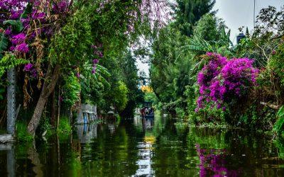 Panorámica de los canales en Xochimilco