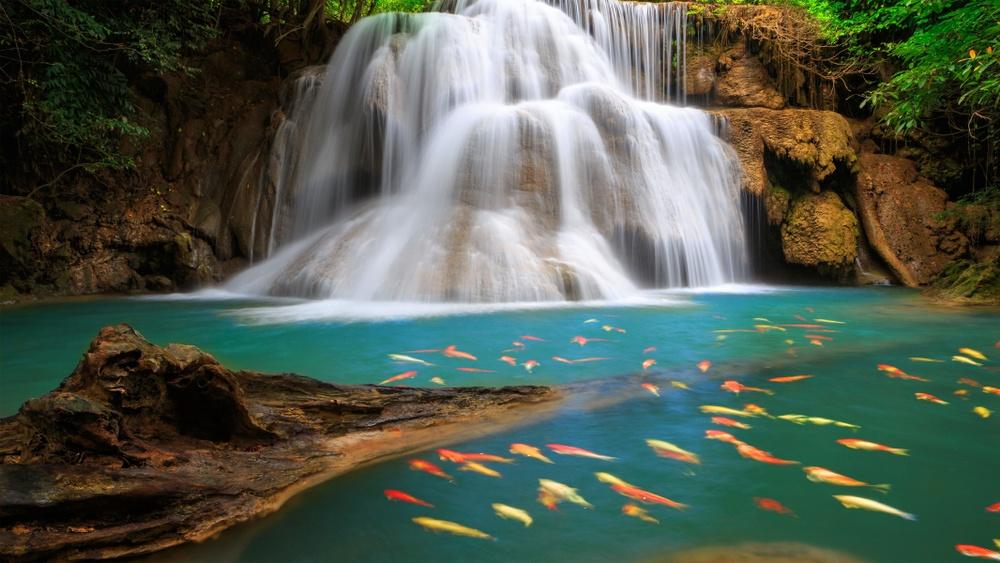 Peces nadando en las cascadas de Chiapas, México