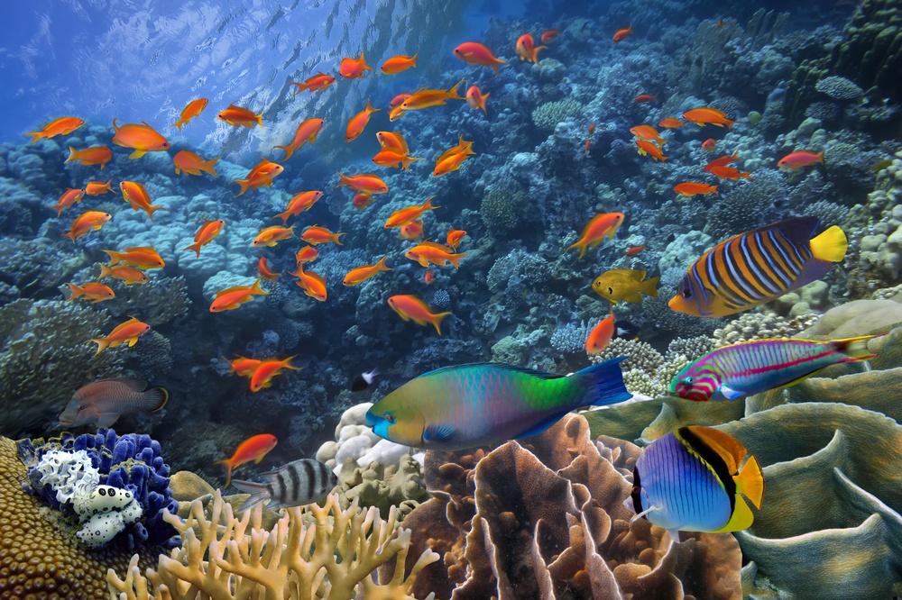 Buceando bajo el Océano en Cancún