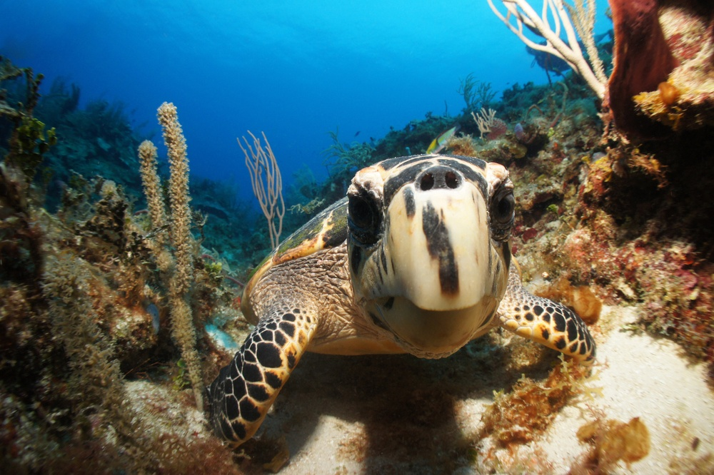 Tortuga en la Riviera Maya