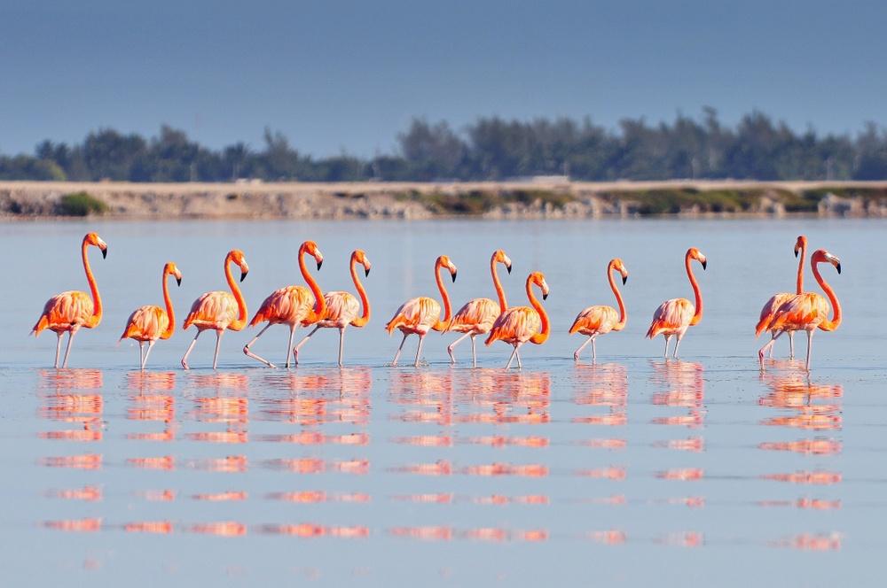 Tour flamencos río lagartos