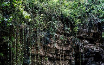 Interior cenote xcajum