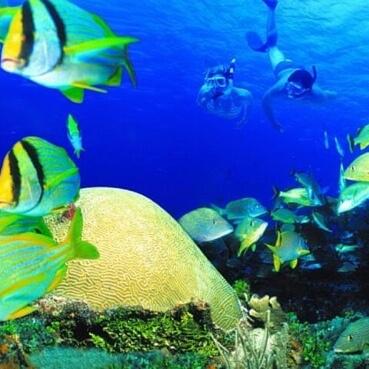 Imágen tour Coral Reef Snorkeling