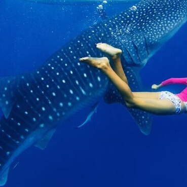 Imágen tour Swim with Whale Sharks